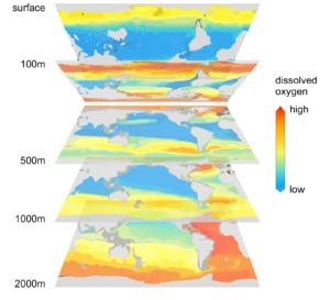 Ocean dissolved oxygen depth slices