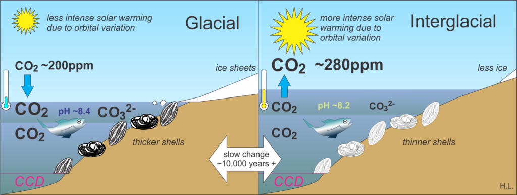 CO2 changes between glacials and interglacials